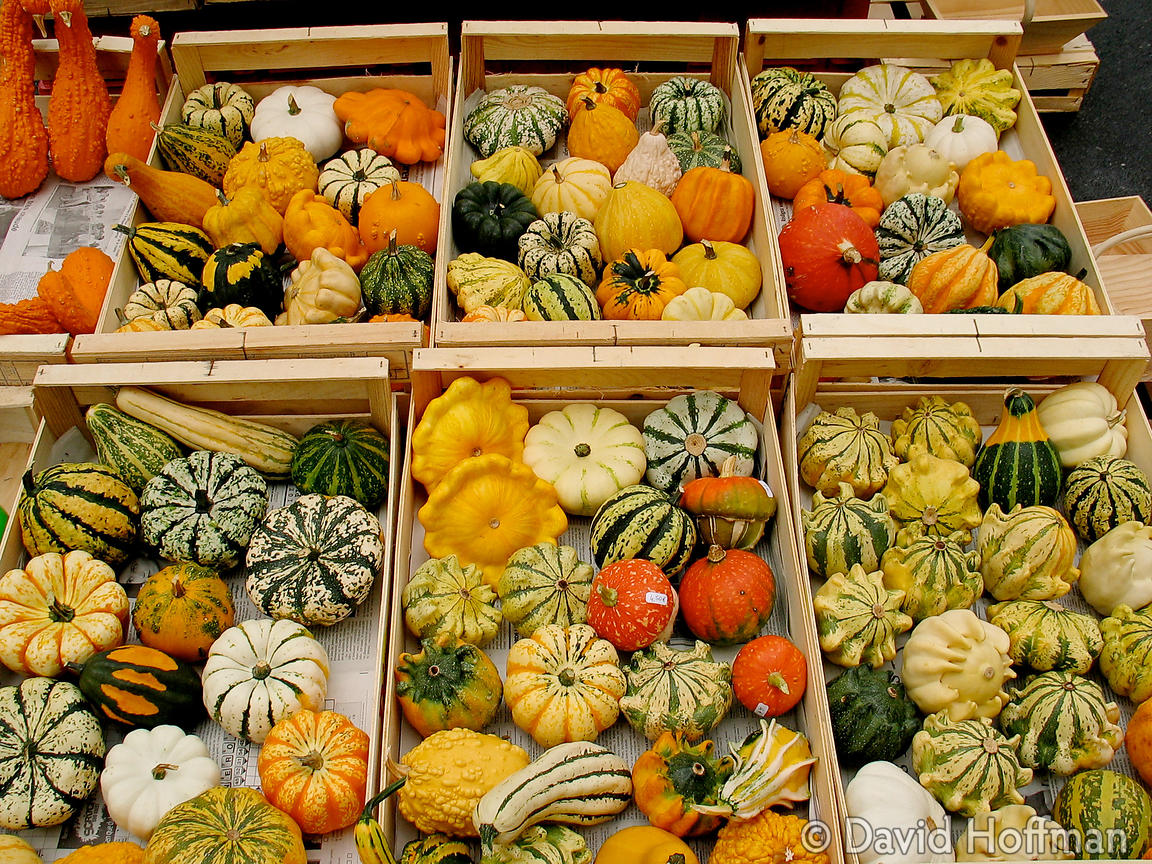 squashes in Bergerac market, France