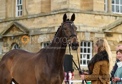 Flora Young and DOCTORS ORDERS at the trot up, Equitrek Bramham Horse Trials 2019