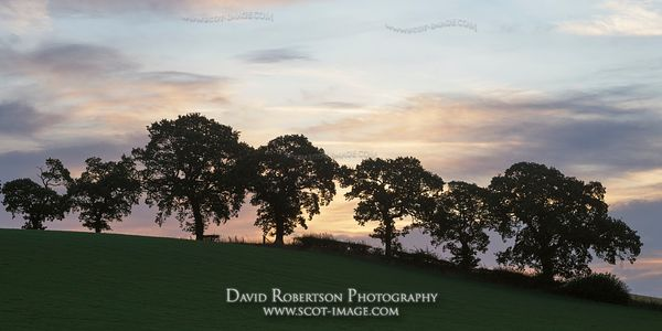 Prints & Stock Image - Line of trees at sunrise on skyline near Alloa, Clackmannanshire, Scotland.