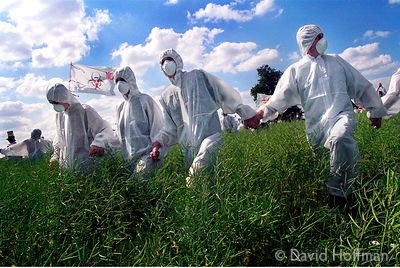 Protesters against Genetically Modified food invade a field trial of oil seed rape planted By AgrEvo, Watlington, Oxfordshire...