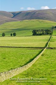 Image - Fields and countryside near Peebles, Borders