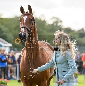 Elisabeth Halliday-Sharp and DENIRO Z at the trot up, Land Rover Burghley Horse Trials 2019