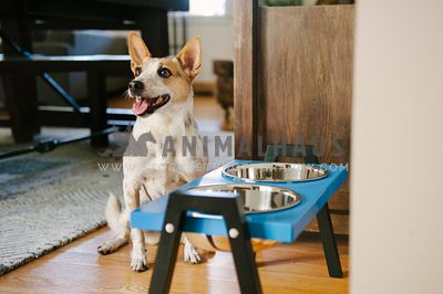 A dog patiently waiting next to some elevated food bowls for his meal