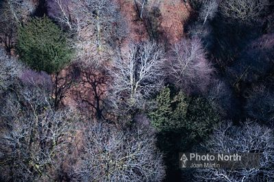 RUSLAND 02A - Aerial view of trees in the Rusland Valley