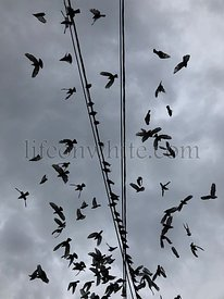 Flock of bird flying over a wire, cloudscape background