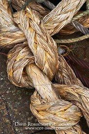 Image - Knot in old rope