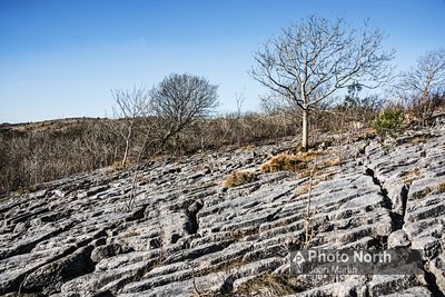 HUTTON ROOF 36A - Limestone pavement, Hutton Roof Crags