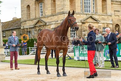 Aurelie Gomez and SLAMM DE LA SELUNE at the trot up, Equitrek Bramham Horse Trials 2019