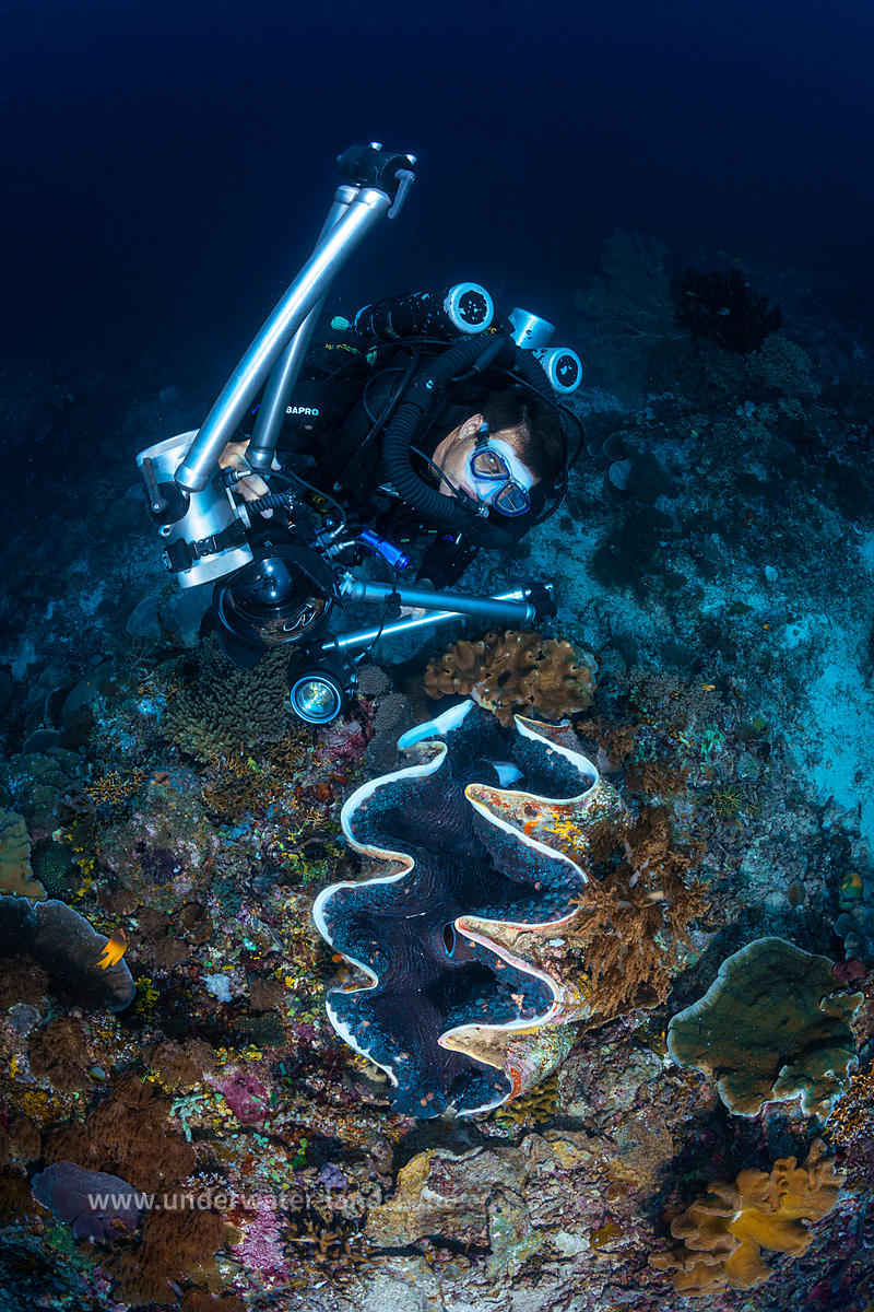 Diver and giant clam