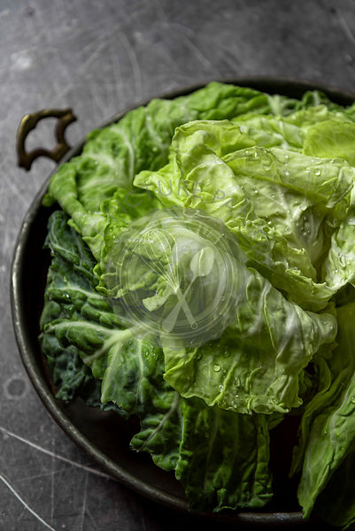 Head of fresh cabbage