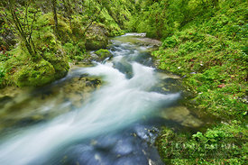 Brook in gorge - Europe, Germany, Bavaria, Upper Bavaria, Traunstein, Inzell, Weissbach Gorge - digital