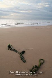 Image - Old rope on the beach at Lunan Bay Angus, Scotland