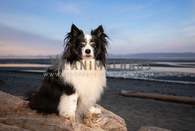 Small fluffy dog sitting on log at the beach