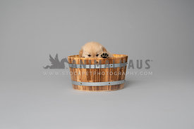 puppy hiding in wood bucket on grey backdrop