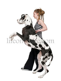 Young girl walking her dog (Great dane 4 years)