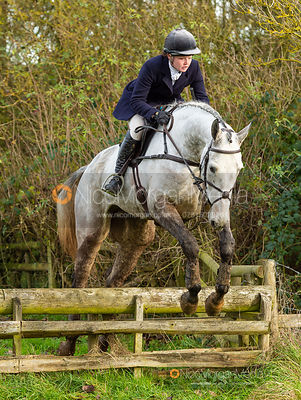 Meghan Healy jumping a fence near Knossington Spinney - The Cottesmore Hunt at Owston 19/11