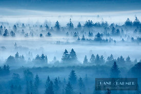 Misty mood in Pupplinger Au - Europe, Germany, Bavaria, Upper Bavaria, Bad Tölz-Wolfratshausen, Icking, Schlederloh (Puppling...