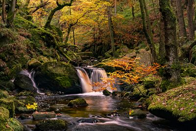 Beautiful sapling by Burbage Brook in Padley Gorge