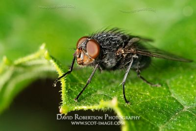 Image - Fly standing on the edge of a leaf