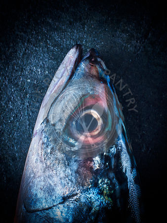A mackerel fish head with eyes, against a blue background
