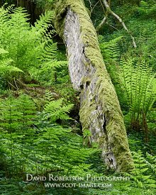 Image - Fallen tree in wood surrounded by ferns
