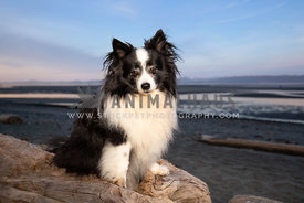 Fluffy little dog sitting on log at the beach