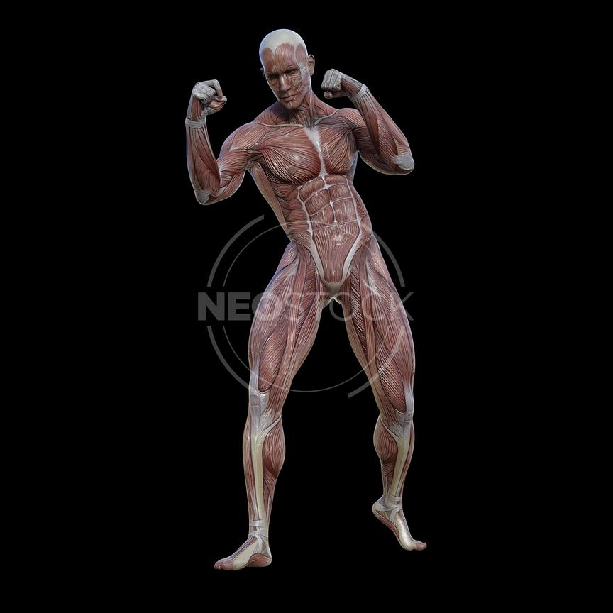 cg-body-pack-male-muscle-map-neostock-46