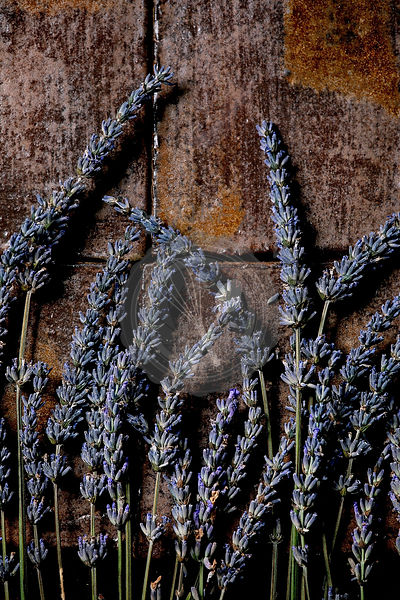 Lavender flowers on dark tile