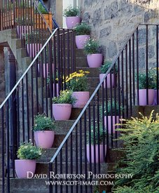 Image - Flower pots on steps outside tenement house in Edinburgh