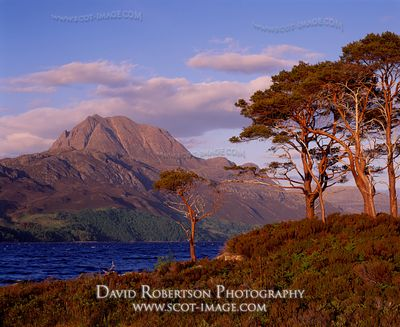 Image - Loch Maree, Slioch and Scots Pines Trees, Wester Ross, Scotland
