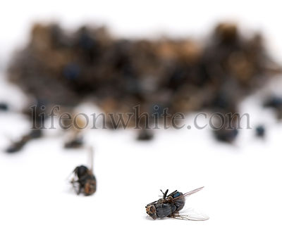 Stack of dead flies and wasps, isolated on white