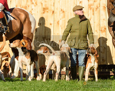 Pytchley hounds at the meet. The Pytchley Hounds visit the Cottesmore at Town Park Farm 15/1