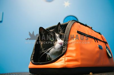 A black and white cat peeking out of an orange cat carrier