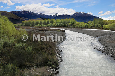 Ashburton River North Branch looking over sunlit willows (Salix spp) to the snow-capped Mount Hutt range beyond, Canterbury, ...