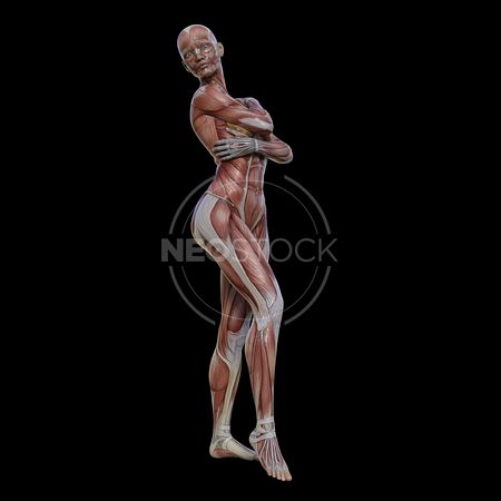 cg-body-pack-female-muscle-map-neostock-23