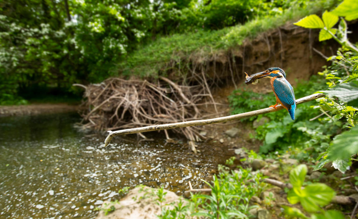 Wide angle kingfisher