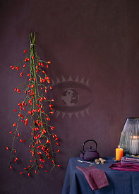 Rose Hip by Weber