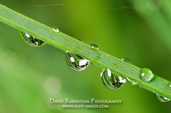 Image - Water droplets on chives.