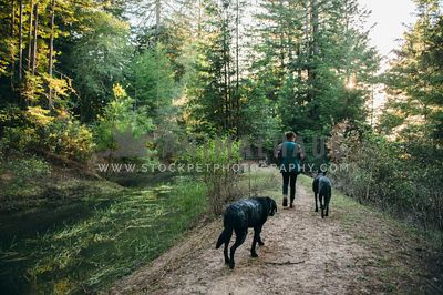 Two dogs following their mom down a forest path