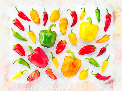 Hot peppers arranged on white background