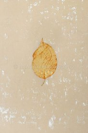 isolated_leaf_008