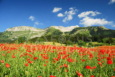 coquelicots_valdelans-HD_focus-outdoor-0002