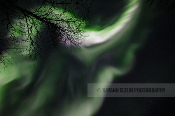 Aurora corona above tree in Lapland