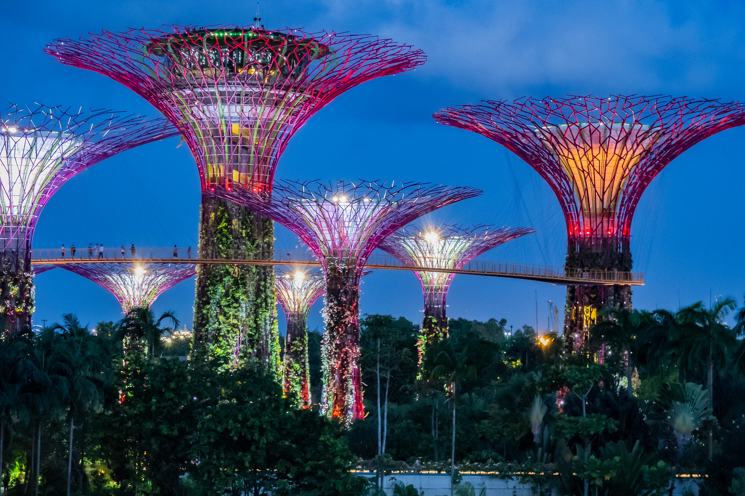 Night view of Gardens by the Bay. Singapore