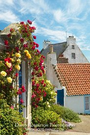 Image - House with roses, Crail, East Neuk of Fife, Scotland