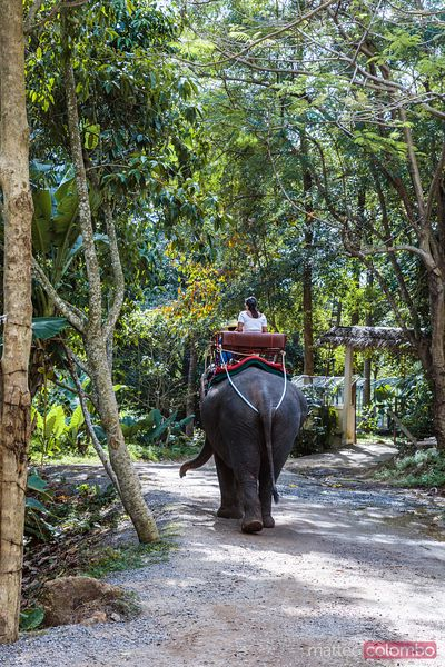 Female tourist riding an elephant, Ko Samui, Thailand