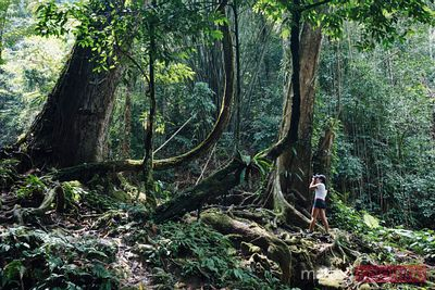 Woman in a tropical forest, Phang Nga bay, Thailand