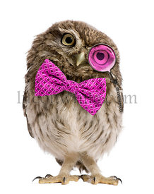 Little Owl wearing magnifying glass and a bow tie in front of a white background