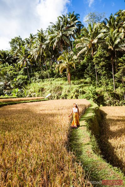 Asian woman walking in a rice field, Bali