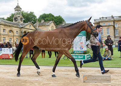 Ben Way and ENDURO A DALRIADA at the trot up, Equitrek Bramham Horse Trials 2019